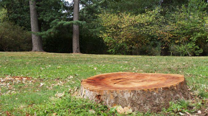 Best Tree Stump Killers
